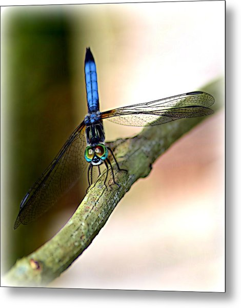 Eyes On You Dragonfly Metal Print by Sheri McLeroy