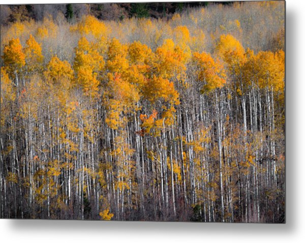 Fading Fall Metal Print