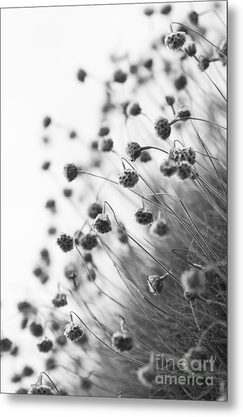 Fading Thrift Metal Print