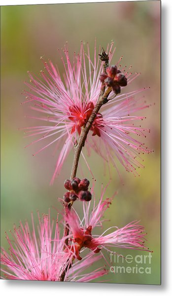 Fairy Duster Metal Print