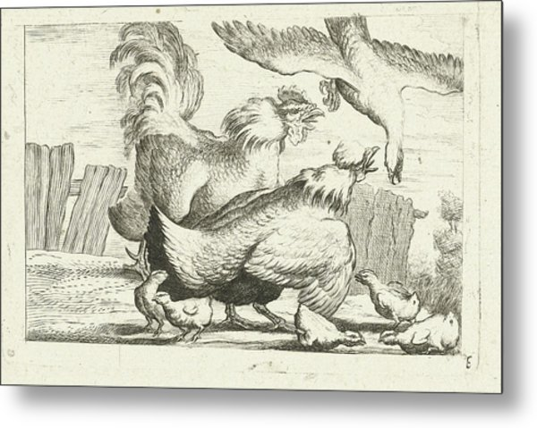 Falcon, Group Of Chickens, Chicks, Peter Casteels IIi Metal Print