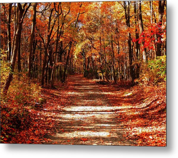 Fall At Cheesequake Metal Print