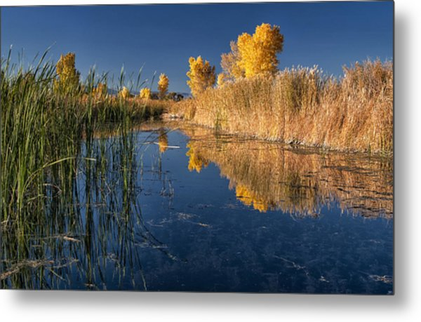 Fall At The Canal Metal Print