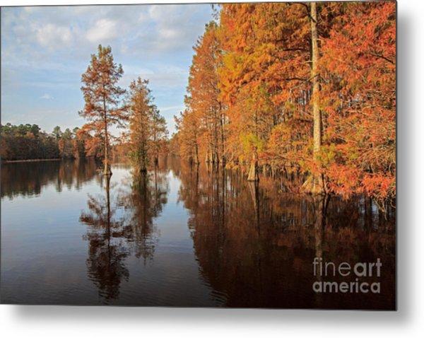Fall At Trap Pond Metal Print