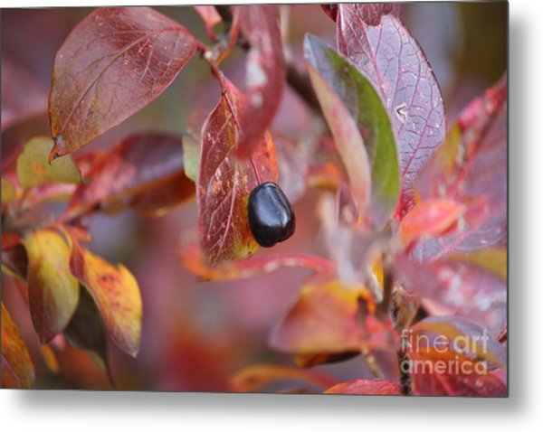 Fall Berry Metal Print