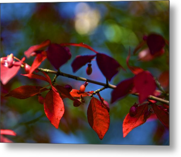 Fall Bokeh Metal Print