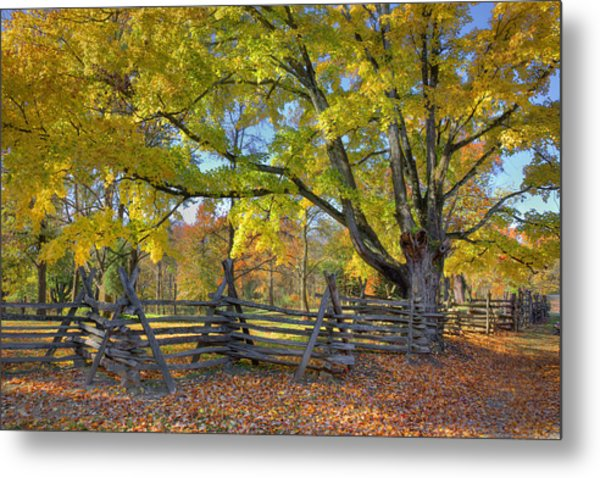 Fall Color #2 Metal Print