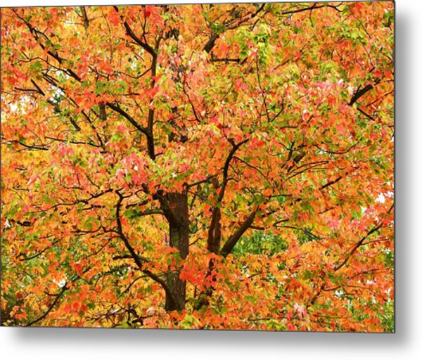 Fall Color Palette Metal Print by Judy Genovese