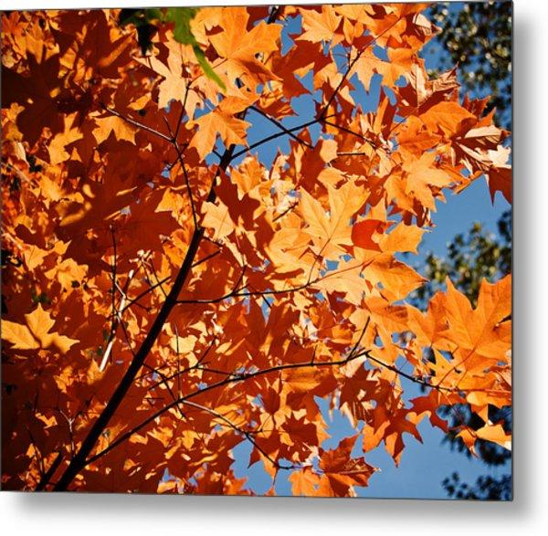 Fall Colors 2 Metal Print