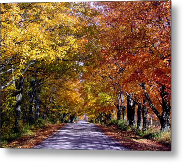 Fall Colors Near Sister Bay Metal Print