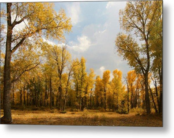 Fall Cottonwoods In Gros Ventre Metal Print