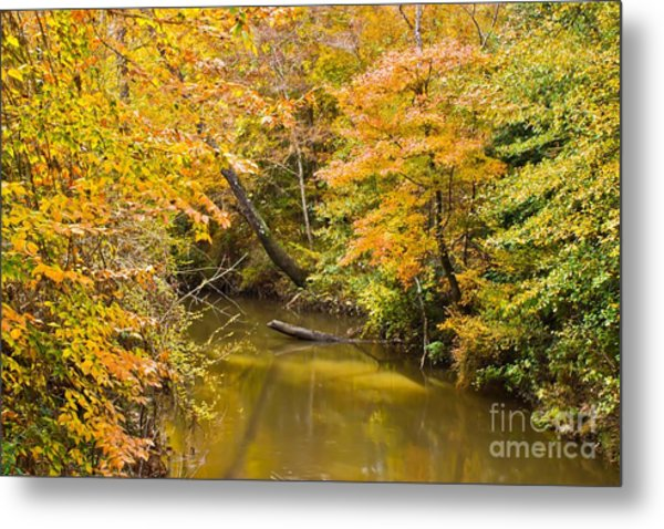 Fall Creek Foliage Metal Print