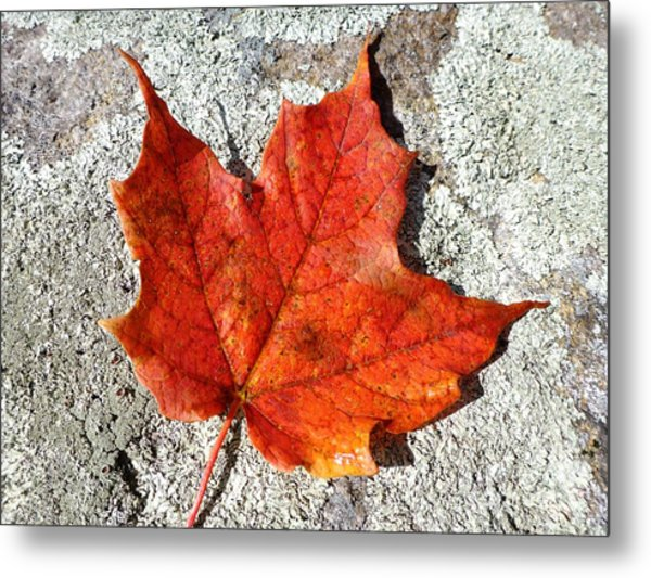 Metal Print featuring the photograph Fall by Cristina Stefan