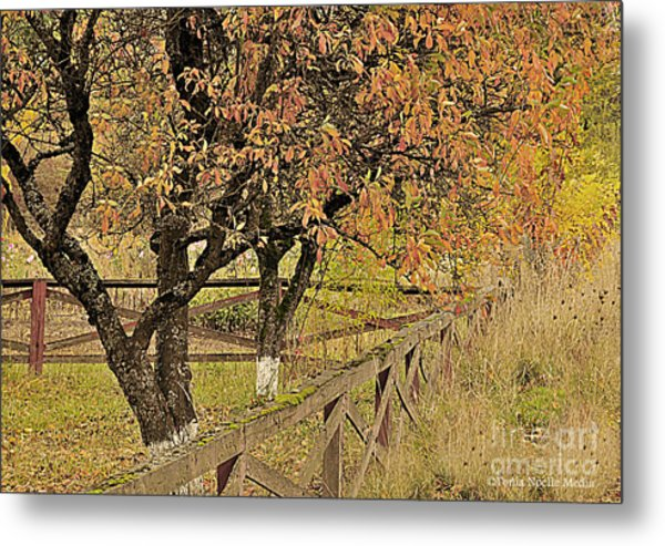 Fall Fenced Metal Print