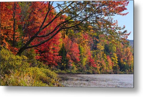 Fall Foliage At Elbow Pond Metal Print