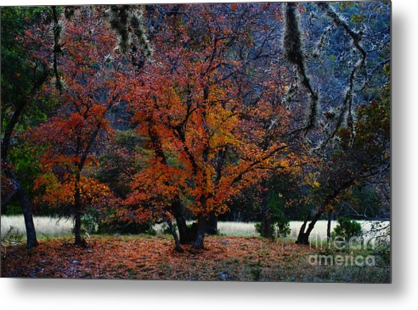 Fall Foliage At Lost Maples State Park  Metal Print