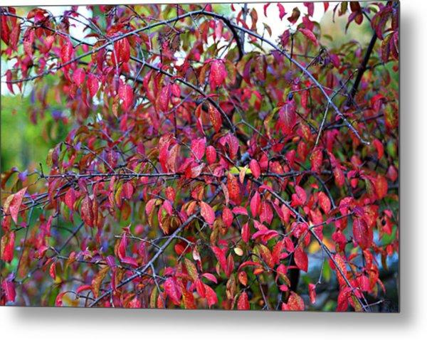 Fall Foliage Colors 05 Metal Print