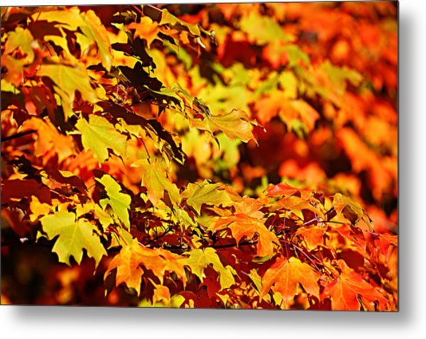 Fall Foliage Colors 13 Metal Print