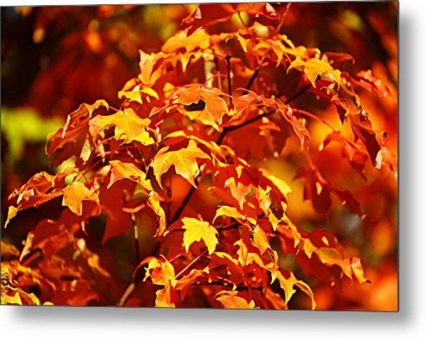 Fall Foliage Colors 14 Metal Print