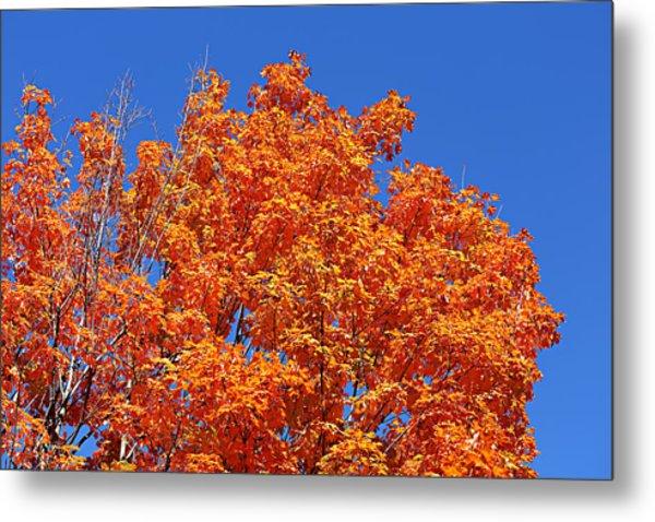 Fall Foliage Colors 19 Metal Print