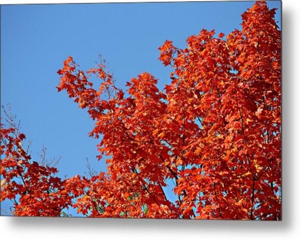 Fall Foliage Colors 20 Metal Print