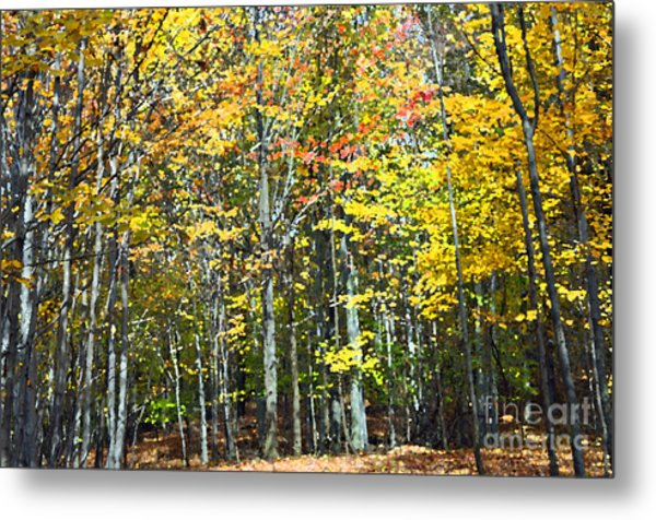 Fall Forest Mm Metal Print
