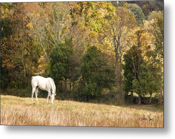 Fall Grazing Metal Print