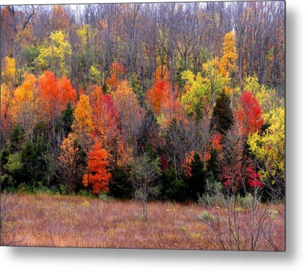 Fall In Dayton Ohio Metal Print