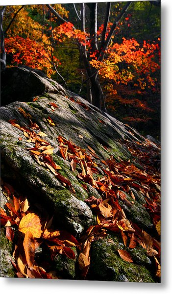 Fall In Gyeryongsan Metal Print