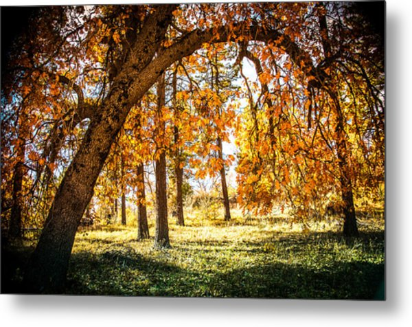 Fall In Laguna Metal Print