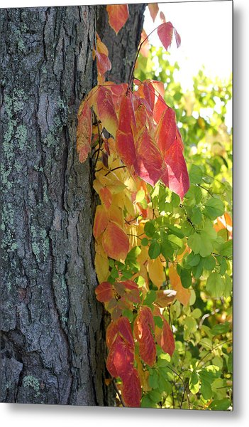Fall In The Orchard Metal Print by Mary Bedy