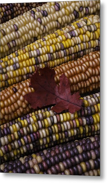 Fall Indian Corn With Leaf Metal Print