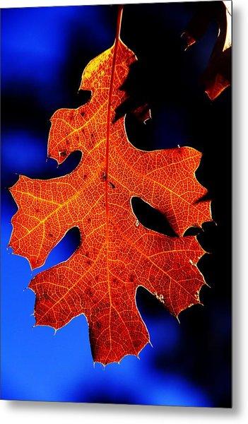 Fall Leaf Closeup Metal Print