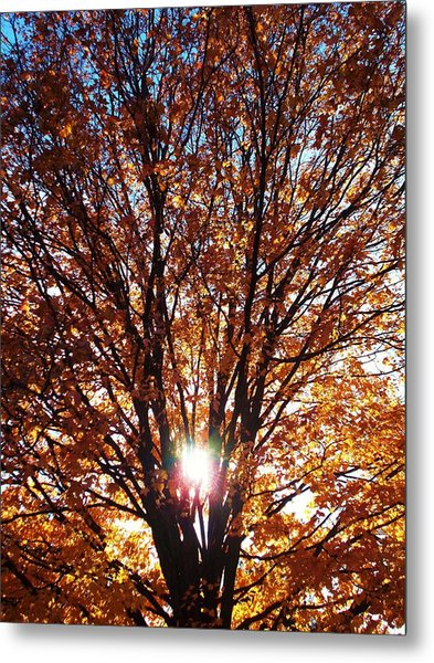 Fall Light Metal Print