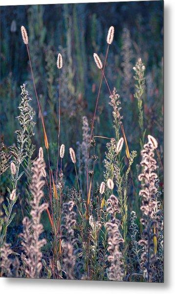 Fall Meadow Backlit Metal Print