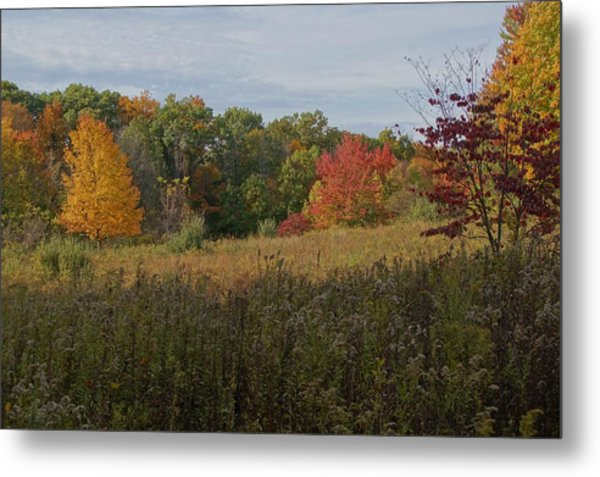 Fall Meadow Metal Print by Doug Hubbard