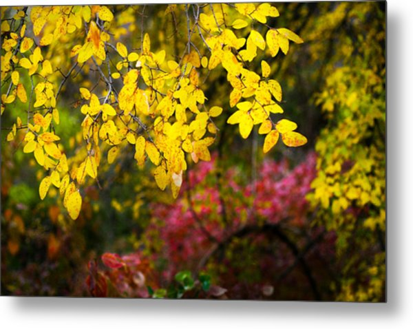 Fall Medley Metal Print
