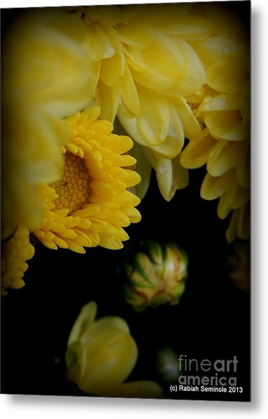 Fall Mums Growing At Blue Horse Rescue Metal Print