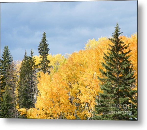 Fall Near Ya Ha Tinda Metal Print