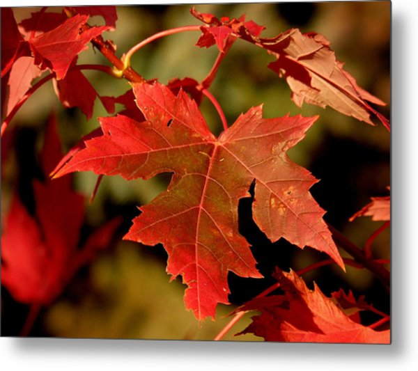 Fall Red Beauty Metal Print