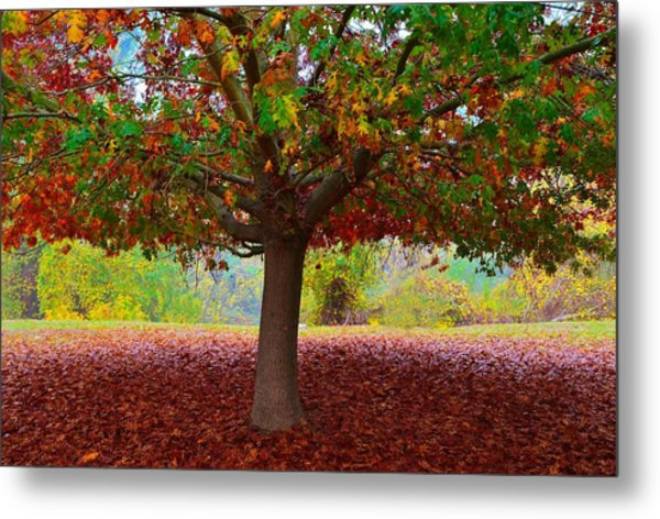 Fall Tree View Metal Print