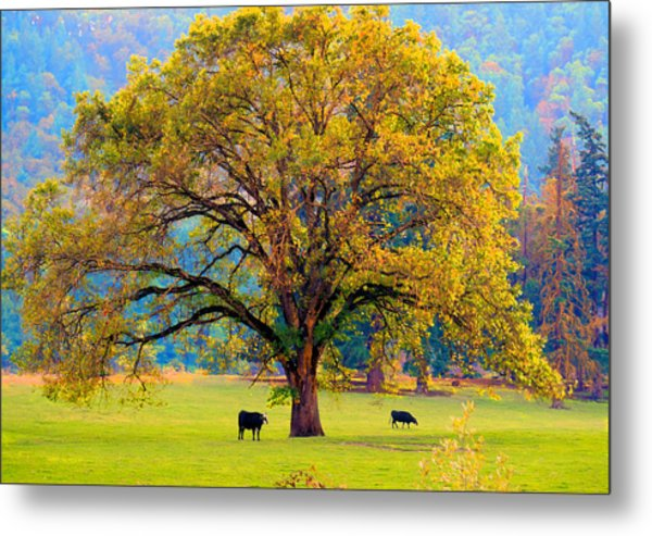 Fall Tree With Two Cows Metal Print