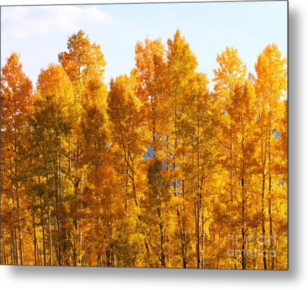 Metal Print featuring the photograph Fall Trees 8x10 Crop by Kate Avery