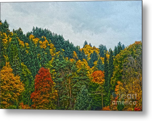 Fall Trees Metal Print by Nur Roy