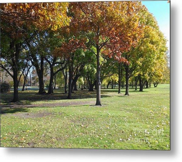 Fall Trees Metal Print