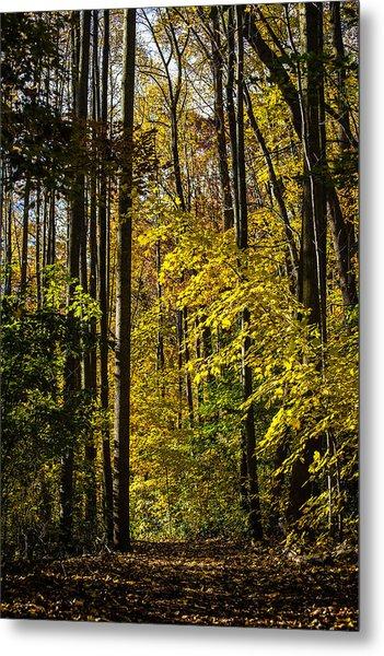 Fall Walk In The Woods Metal Print