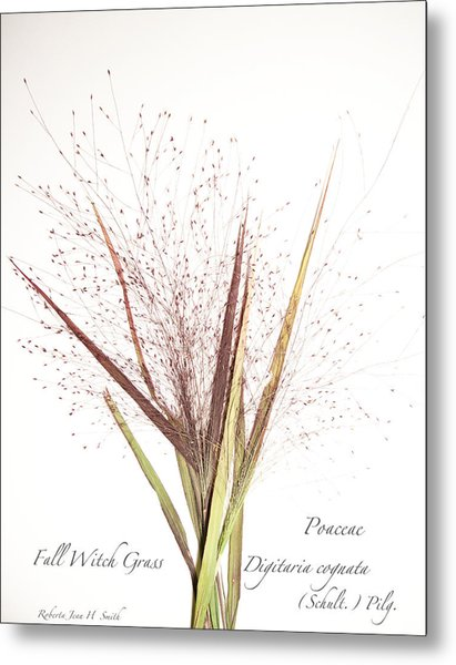 Fall Witch Grass Metal Print