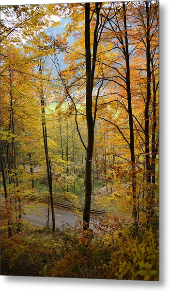 Fall Woods Metal Print by Marie Sullivan
