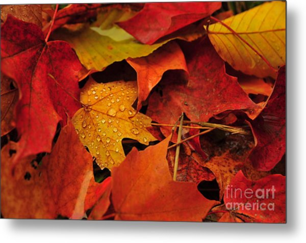 Fallen Beauties Metal Print