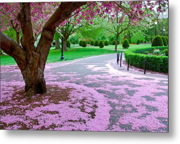 Metal Print featuring the photograph Fallen Blossoms by Michael Hubley